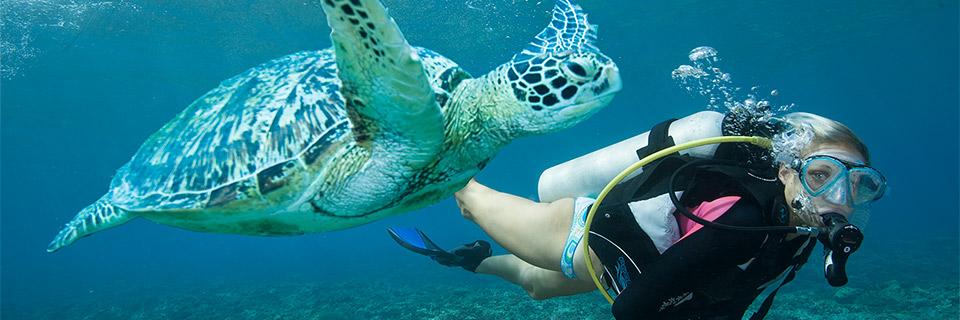 slider-bkg-diver-turtle