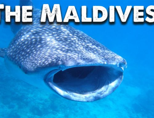 Maldives – Indian Ocean